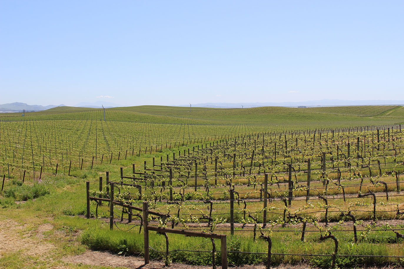 Los Carneros, Coombsville and Downtown Napa